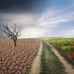 RESILIENCIA EMPRESARIAL BASADA EN VALORES: una oportunidad para salir reforzados y cohesionados de las situaciones complejas
