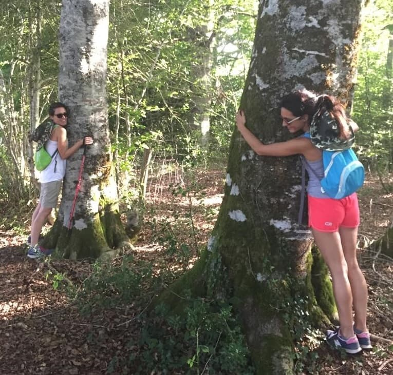 arboles-camino-santiago-aret-activa